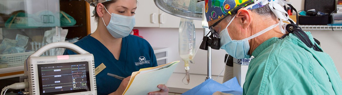 anesthesia safety pets monitoring dog cat