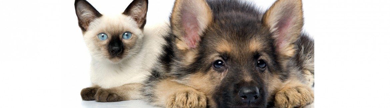 Pet Behavior Resources