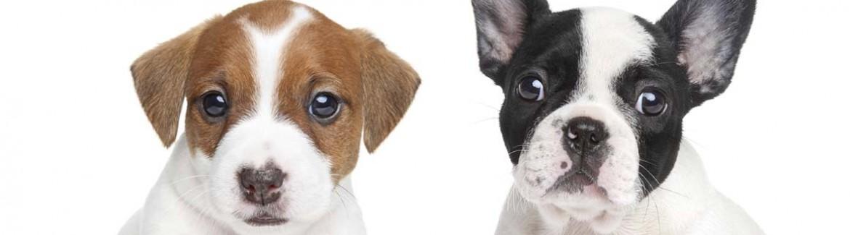 puppy vaccines heartworm behavior training family