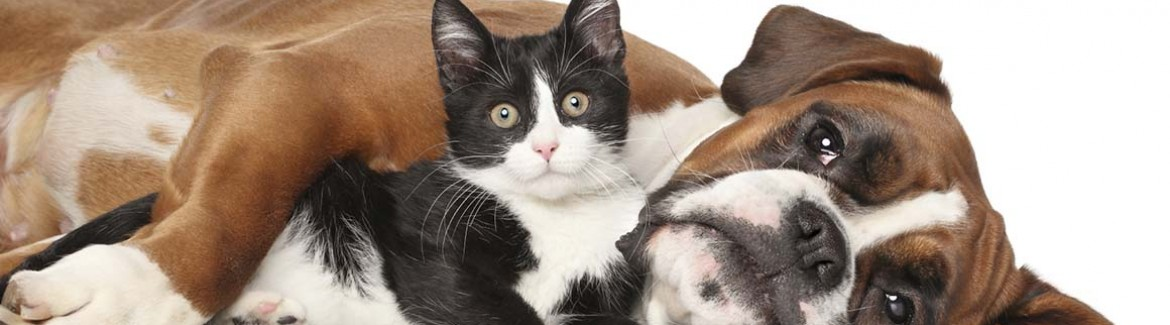 treat pets as family, pet education, pet library, dogs cats