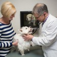 Choosing a Veterinarian