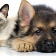 Pet Behavior Resources